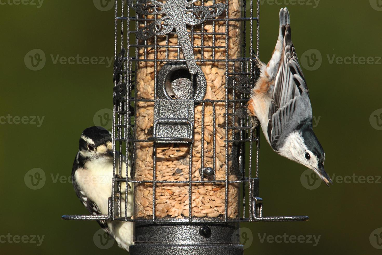 Pair of birds on a feeder photo