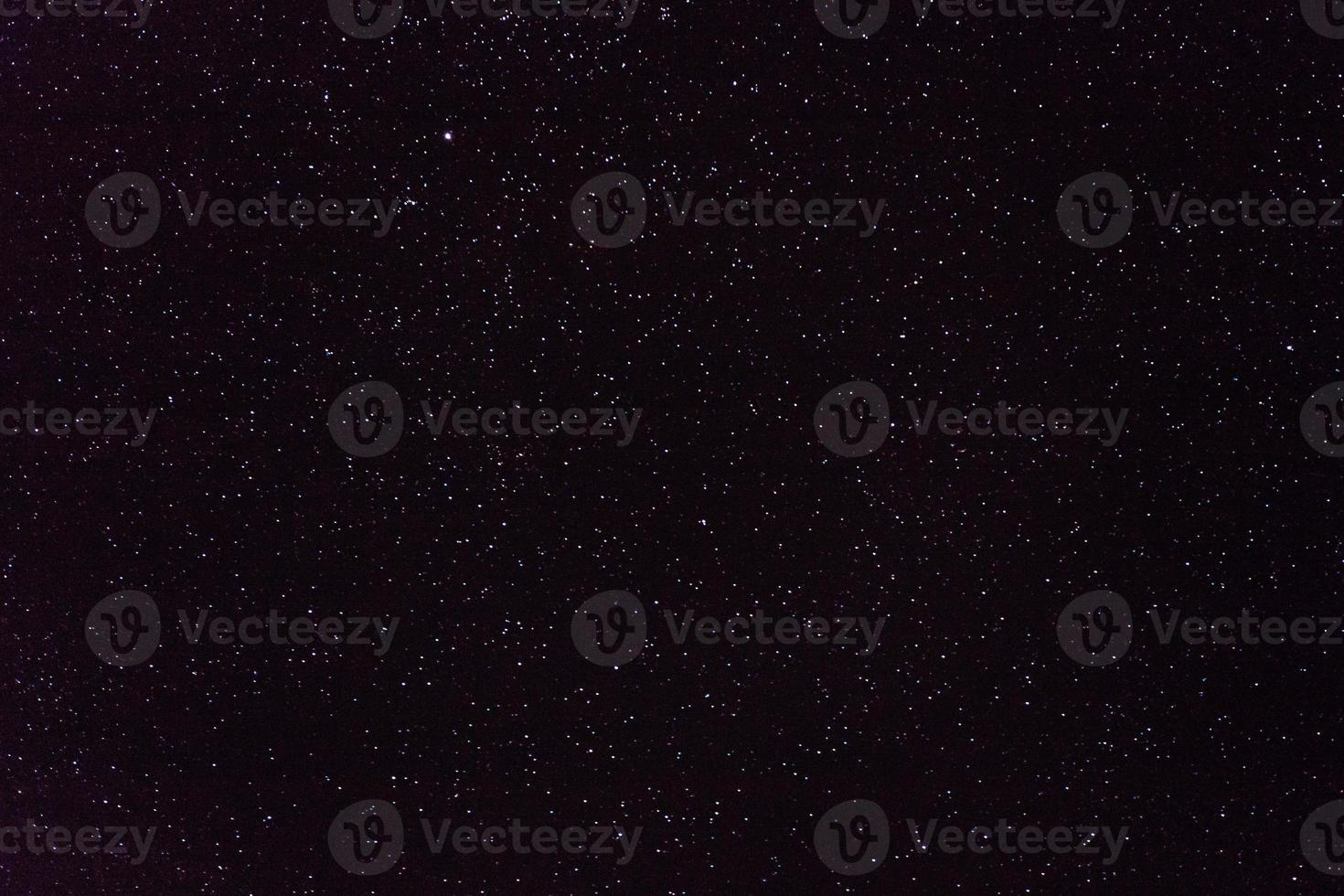 Cygnus amplio campo foto