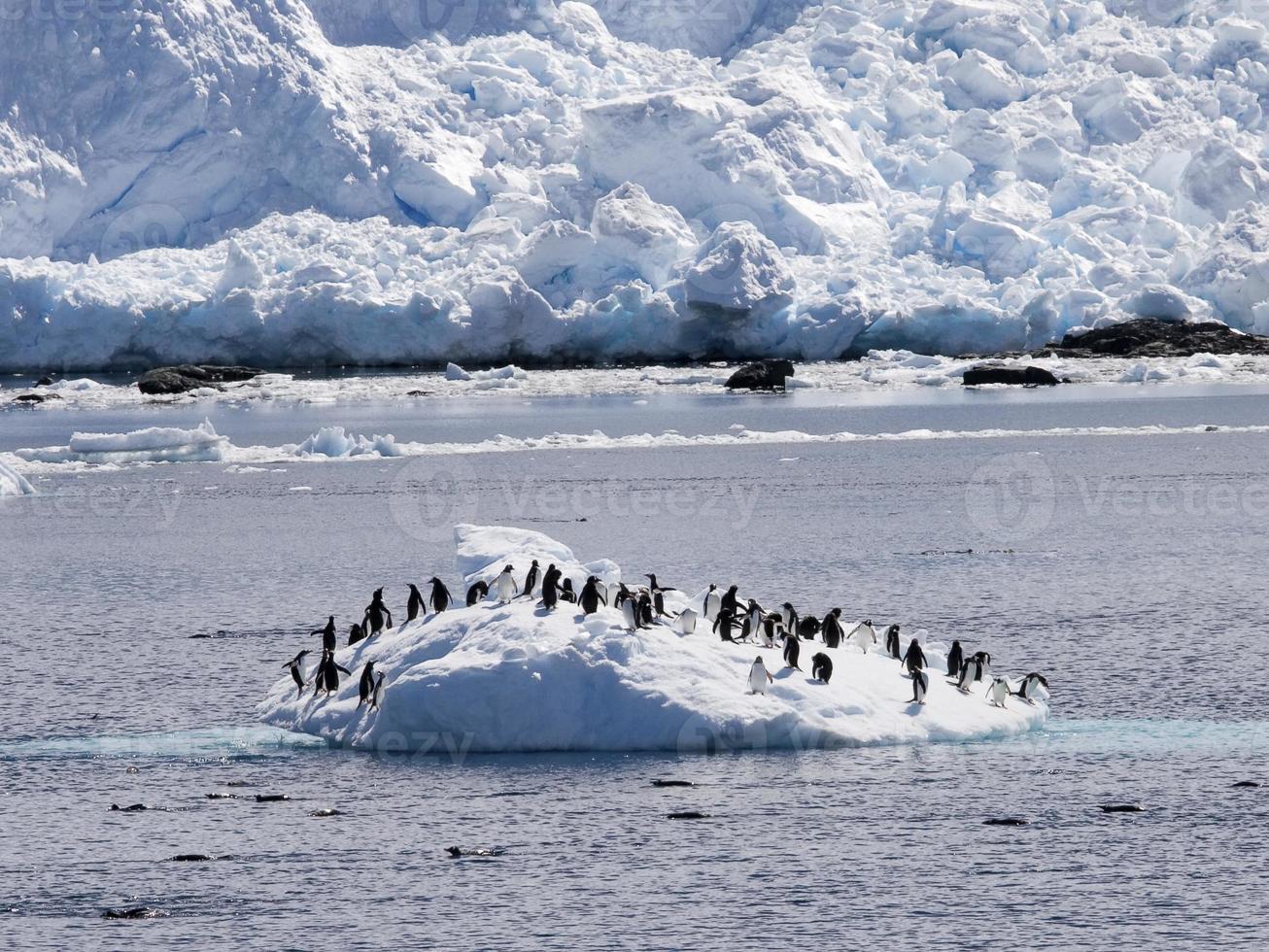 recreación de pingüinos foto