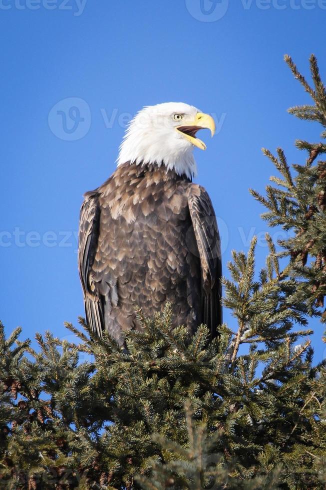 charla de águila foto