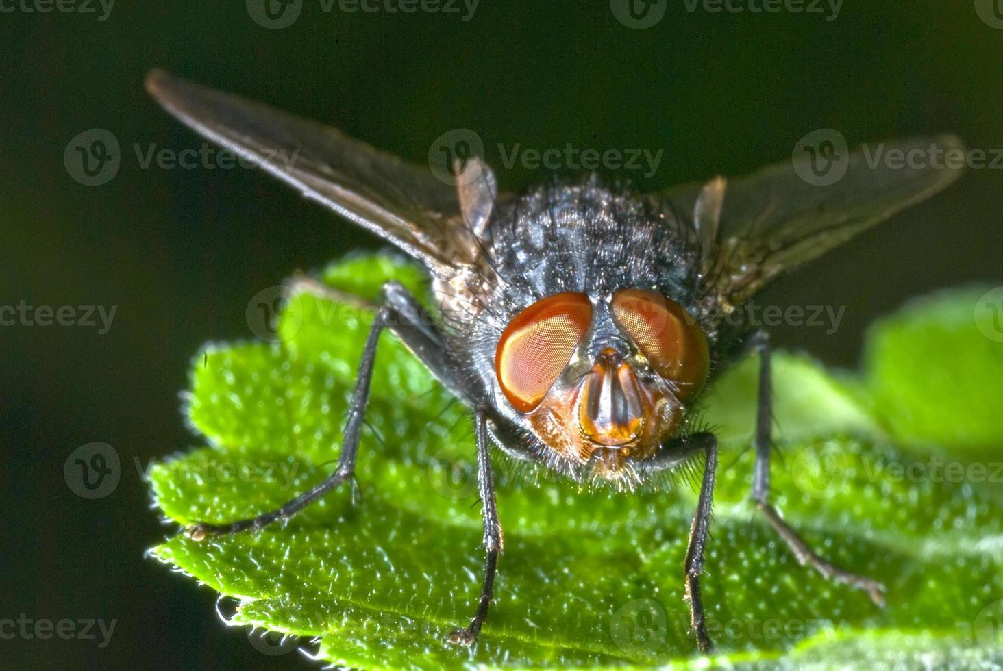 ojos compuestos de mosca foto