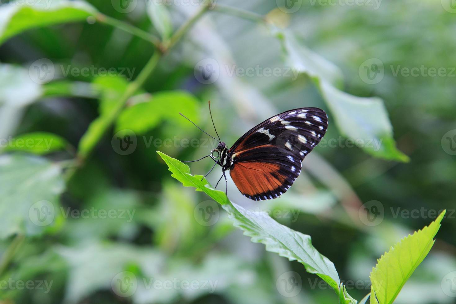mariposa en una hoja foto