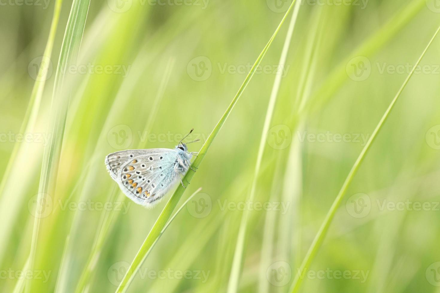 Closeup of a butterfly photo