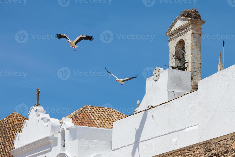 Storks of Faro photo