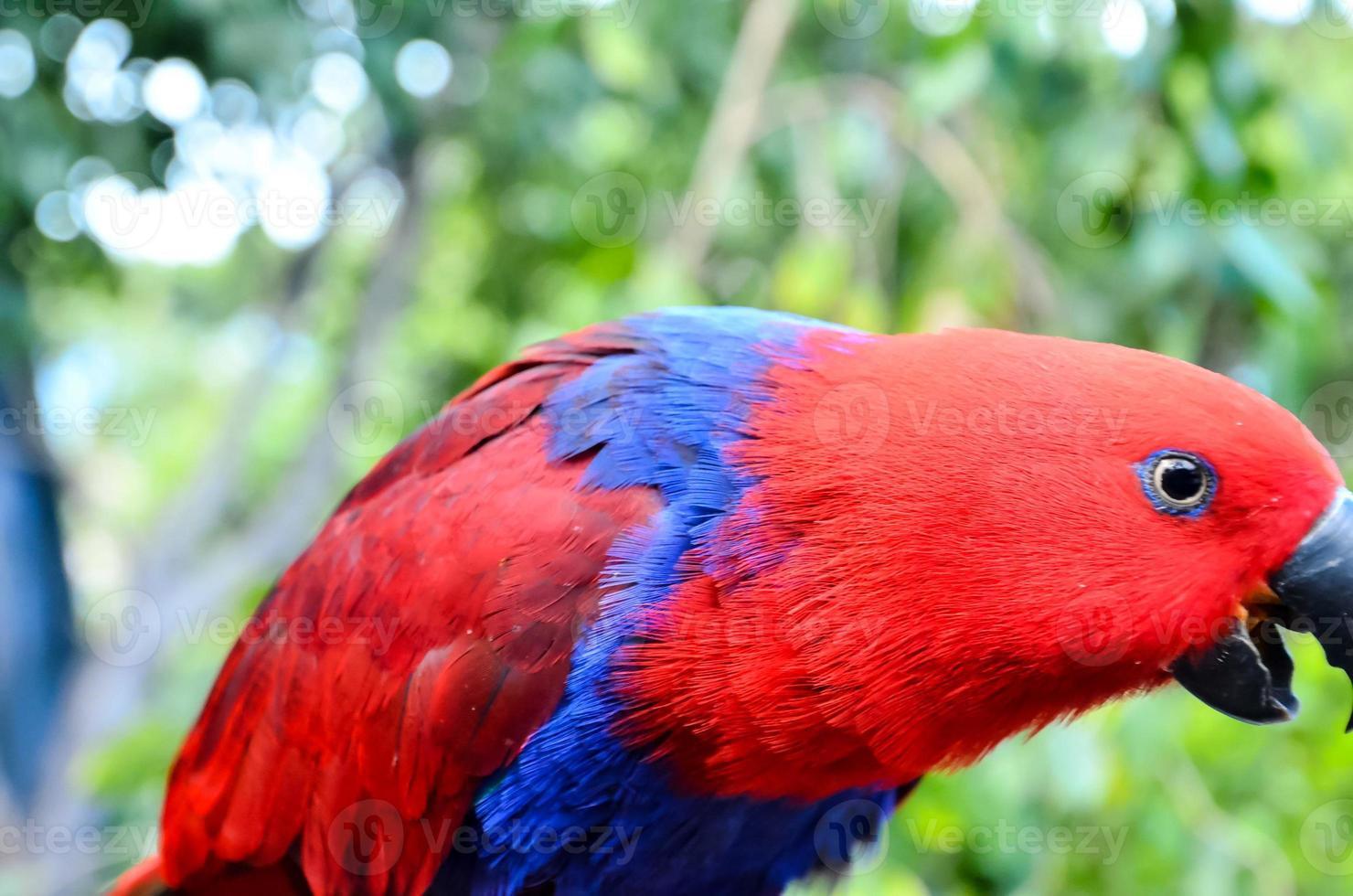 loro pájaro tropical foto