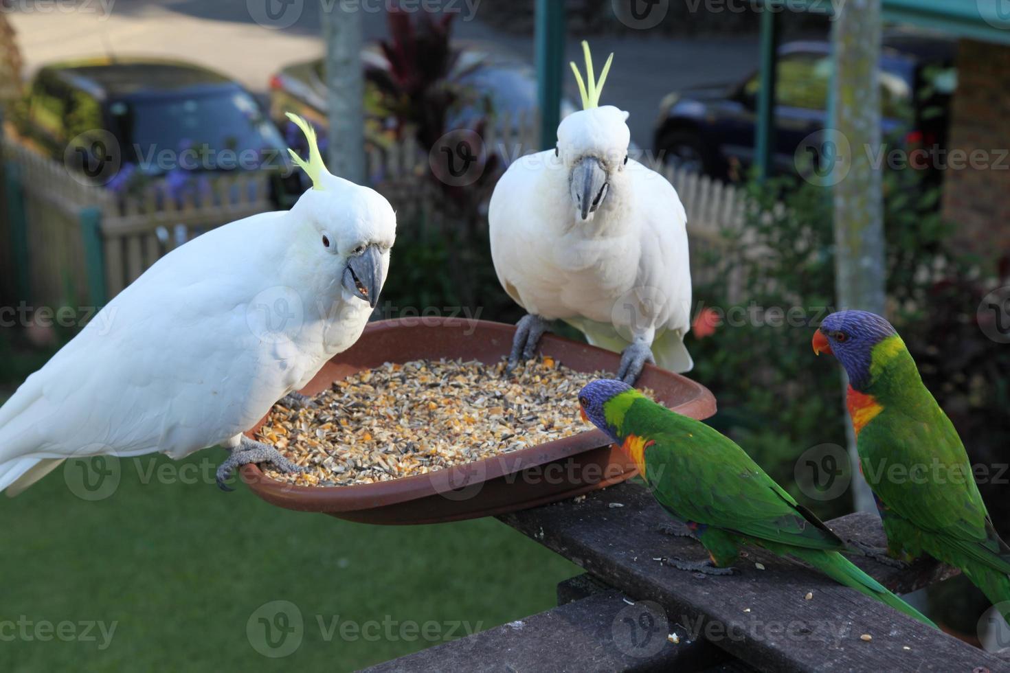 son pájaros felices foto