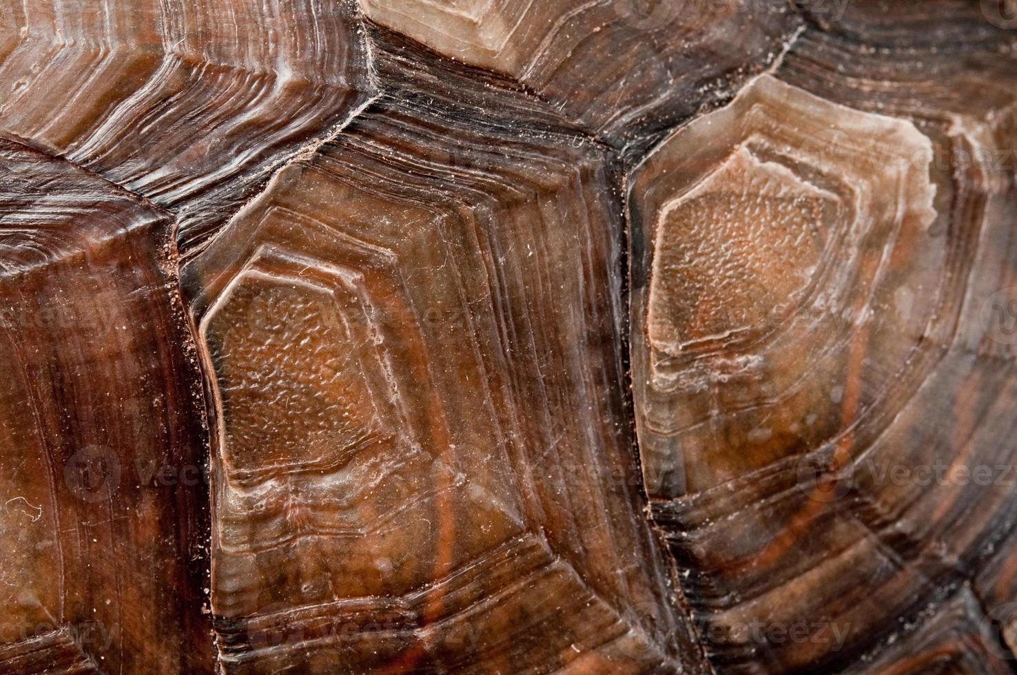 Turtle shell photo