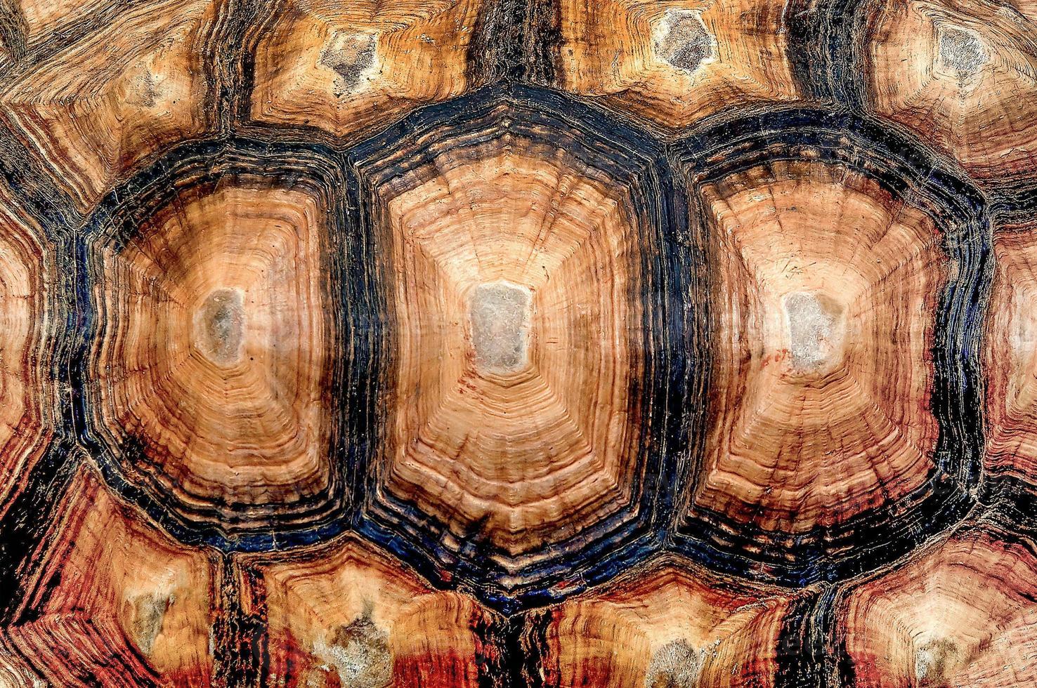 Vista cercana de caparazón de tortuga foto