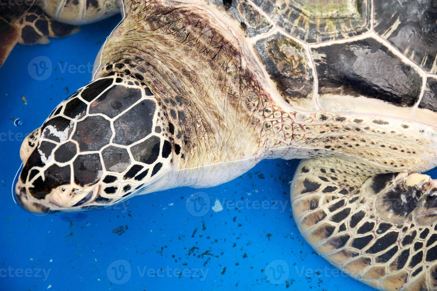 Sea turtle conservation photo