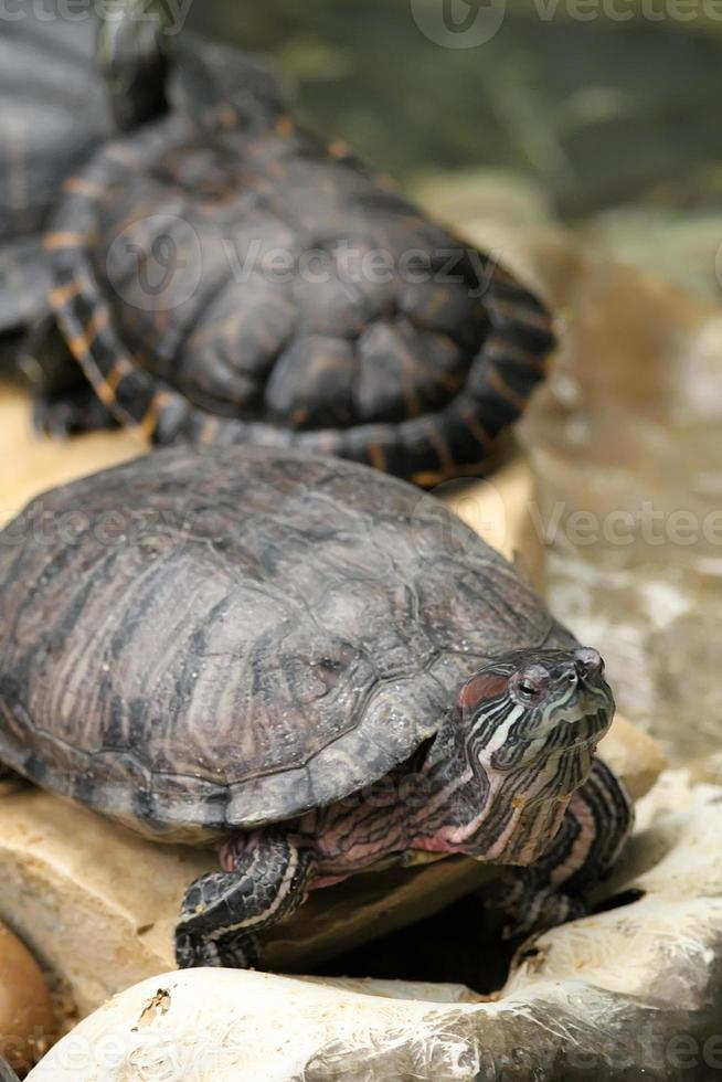 tortugas foto