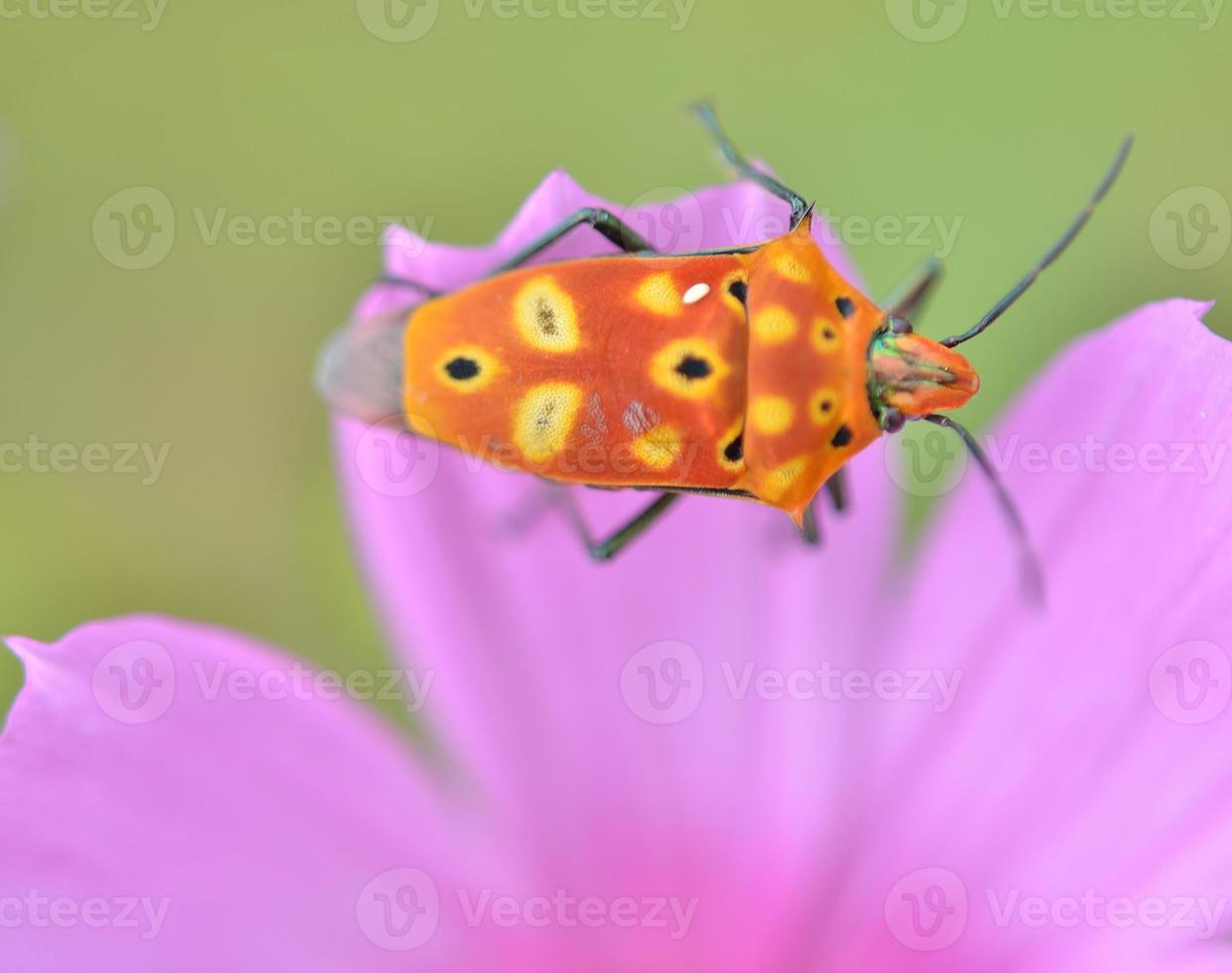 colorful Insect photo