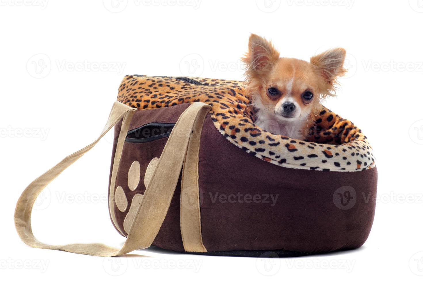 bolsa de viaje y chihuahua foto