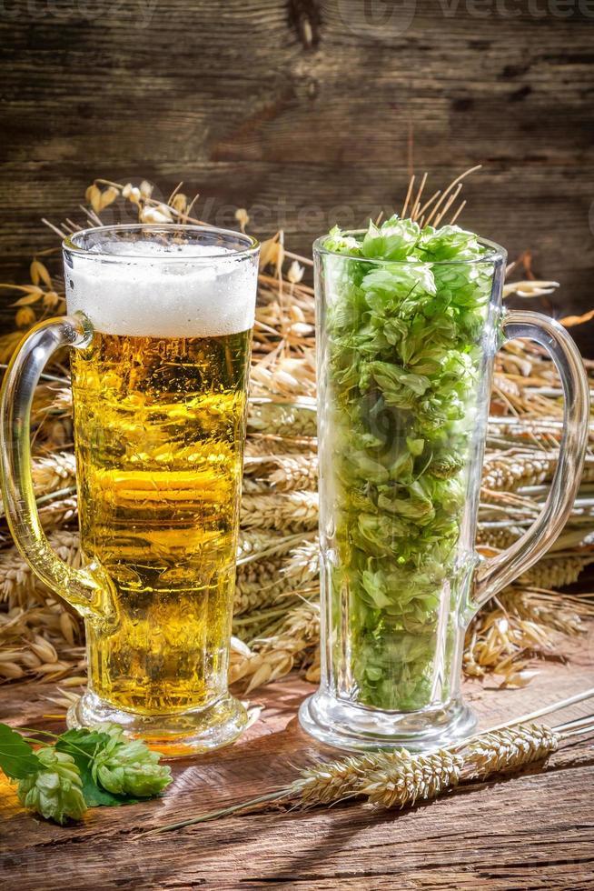 espigas de trigo en oro rodeadas de lúpulo de cerveza fresca foto