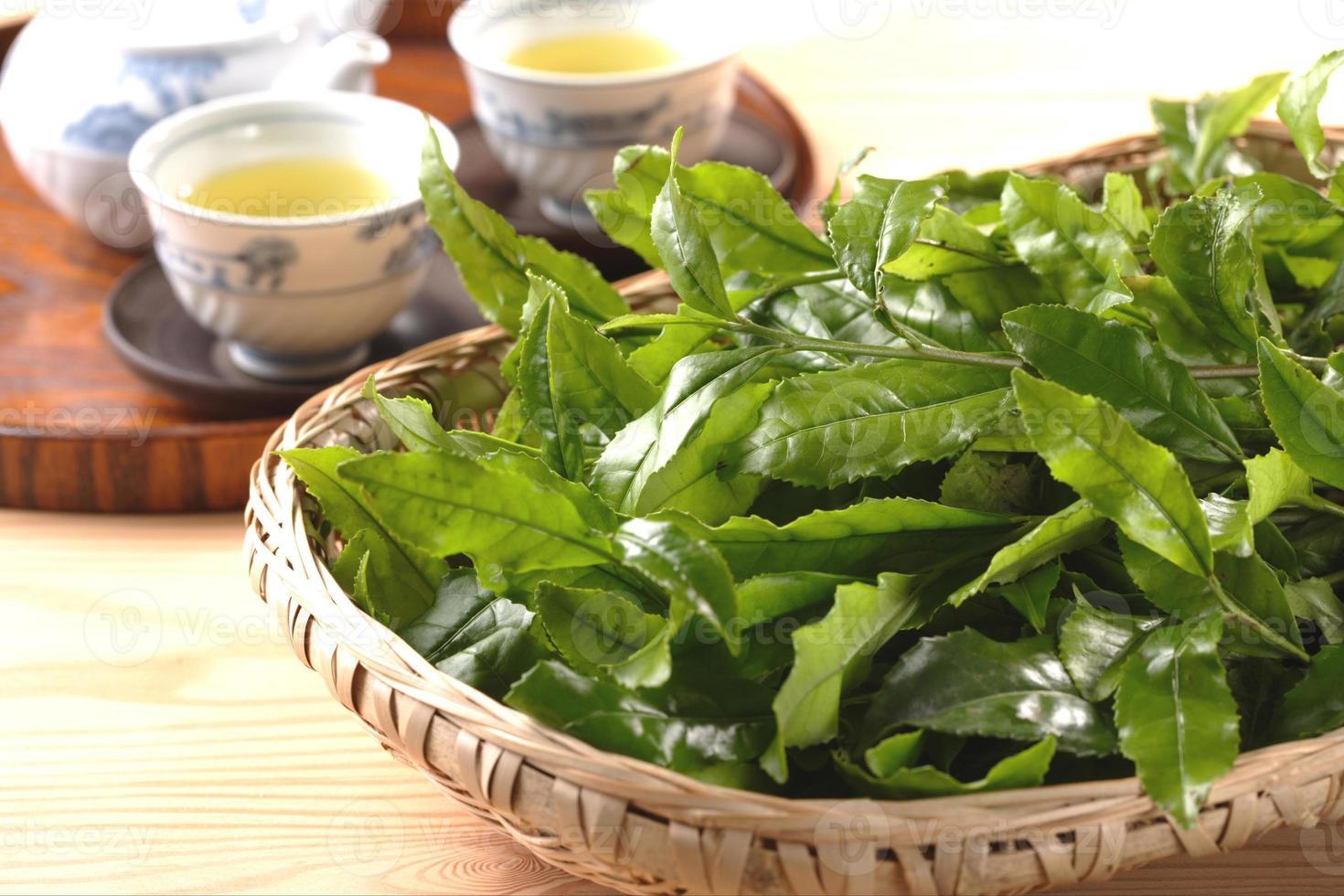 hoja de té verde foto