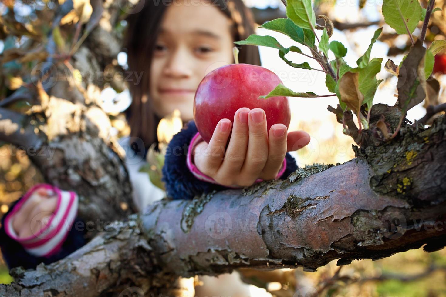 recogiendo manzanas foto