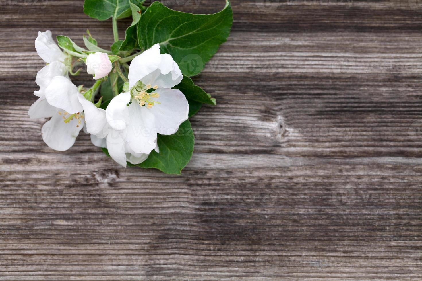 flores de manzana sobre fondo de madera foto