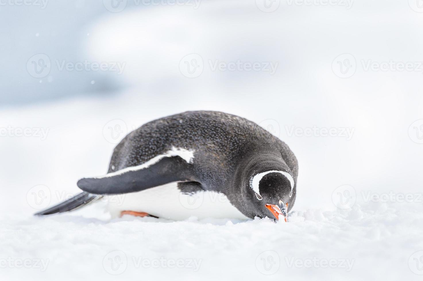 Penguins of Antarctica photo