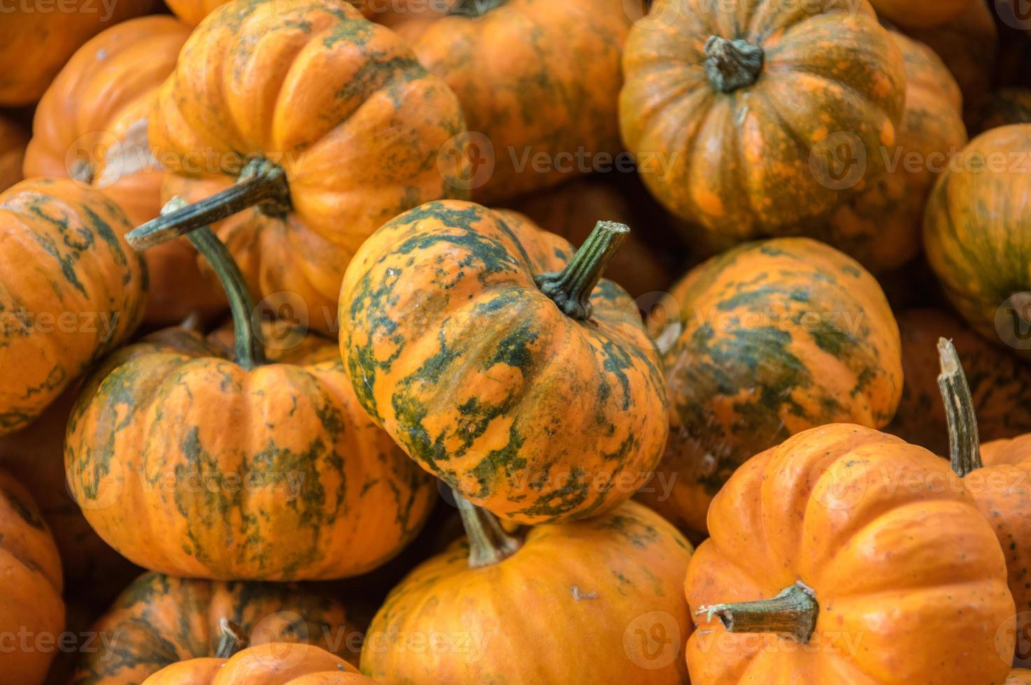 Small Pumpkins photo