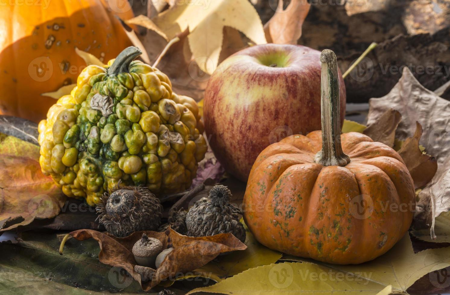 pumpkin  autumn sceme photo