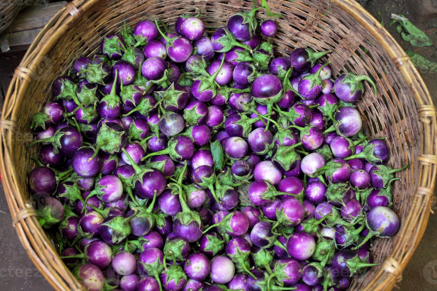 violet eggplants photo