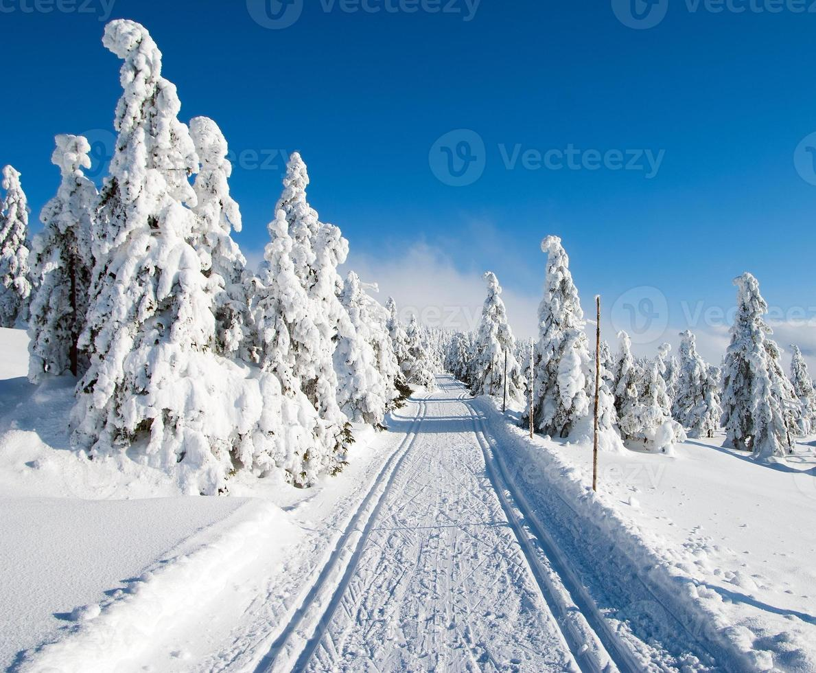 wintry landscape scenery with modified cross country skiing way photo