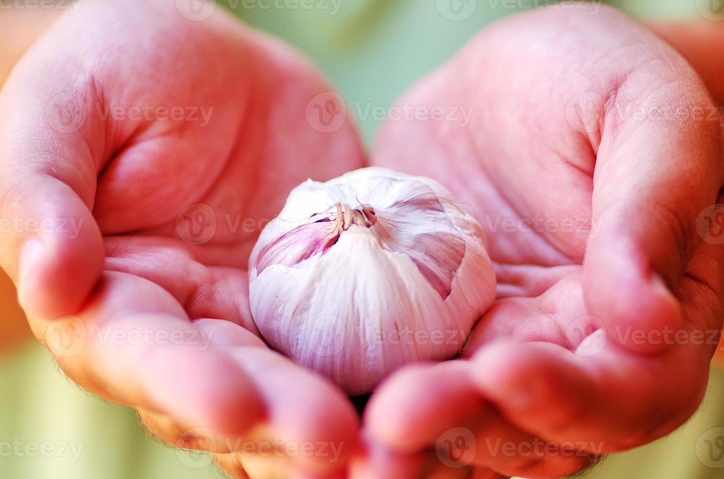 garlic in open hands photo