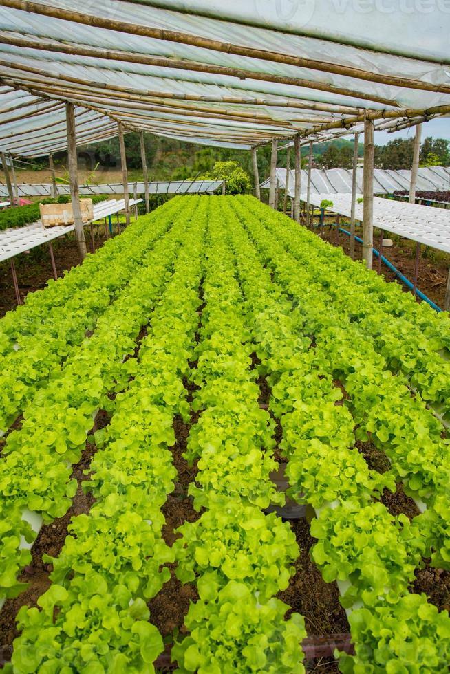 Organic vegetables photo
