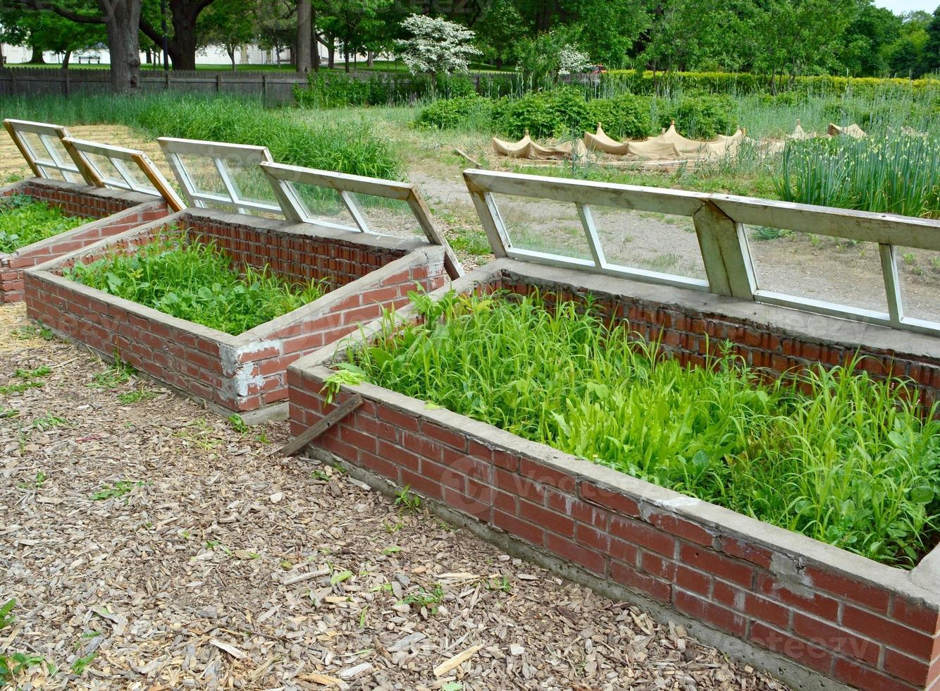 Cold Frame photo