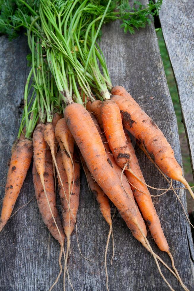 fresh carrots on wooden table photo