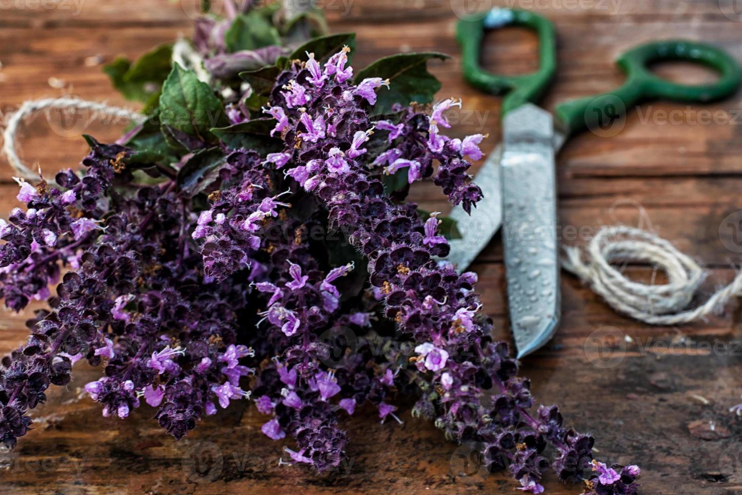 spices Basil photo