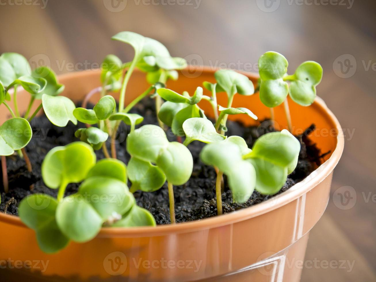Sprout photo