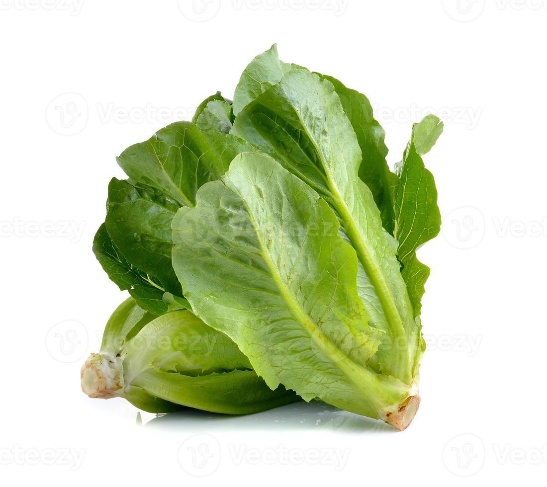 Cos Lettuce on White Background photo