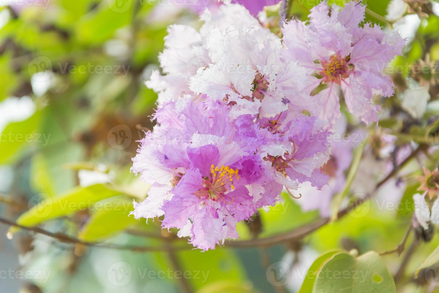 árbol de flor foto