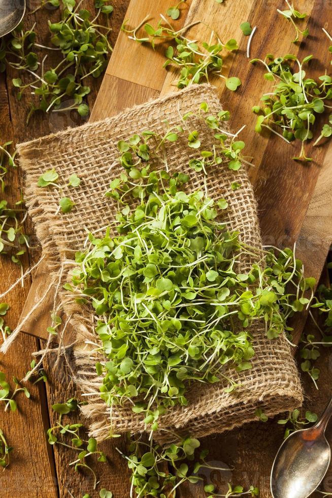Raw Green Arugula Microgreens photo