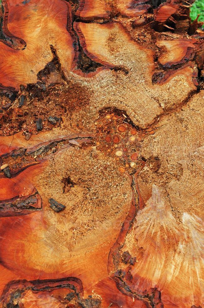 corteza de árbol foto