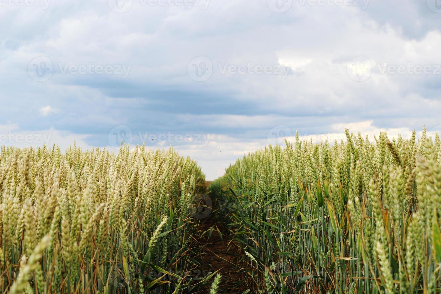 Road in the field photo
