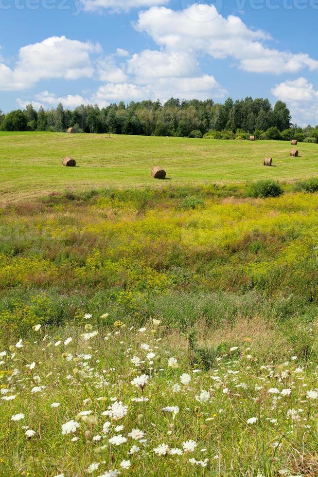 paisaje de verano foto