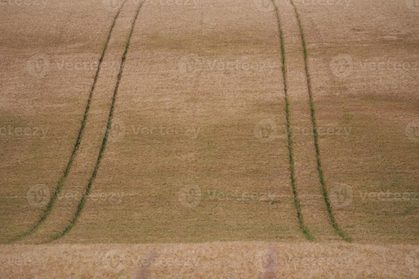 wheat field tracks photo