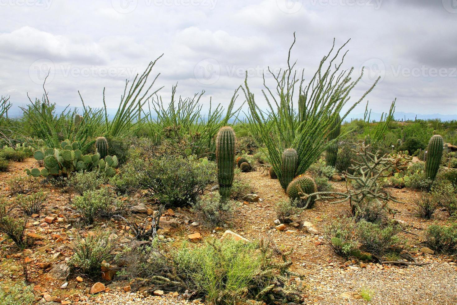 Desert View of Catalina Mountains in Tucson Arizona photo