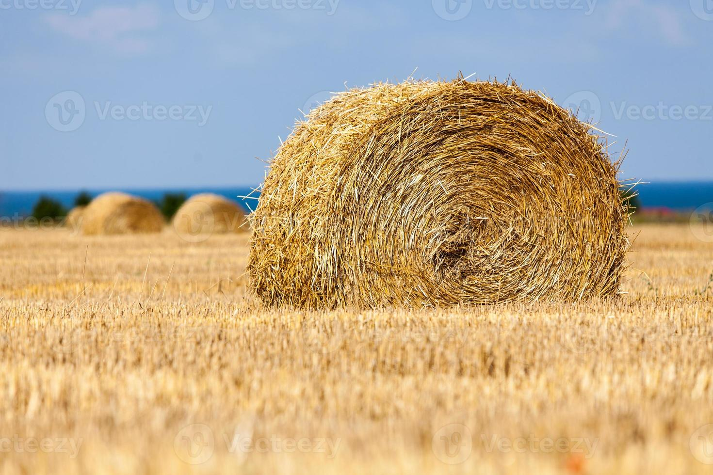 Harvested hilly wheat field with straw bale photo