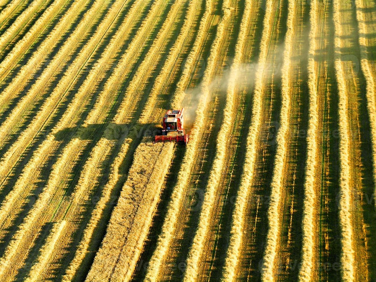 cosechadora en el trabajo foto