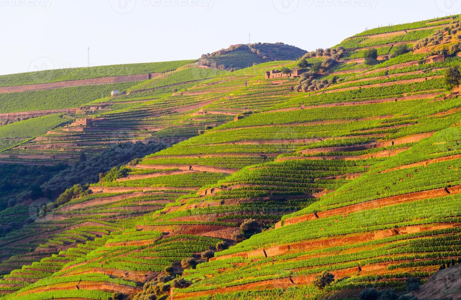 river Douro valley, Portugal photo