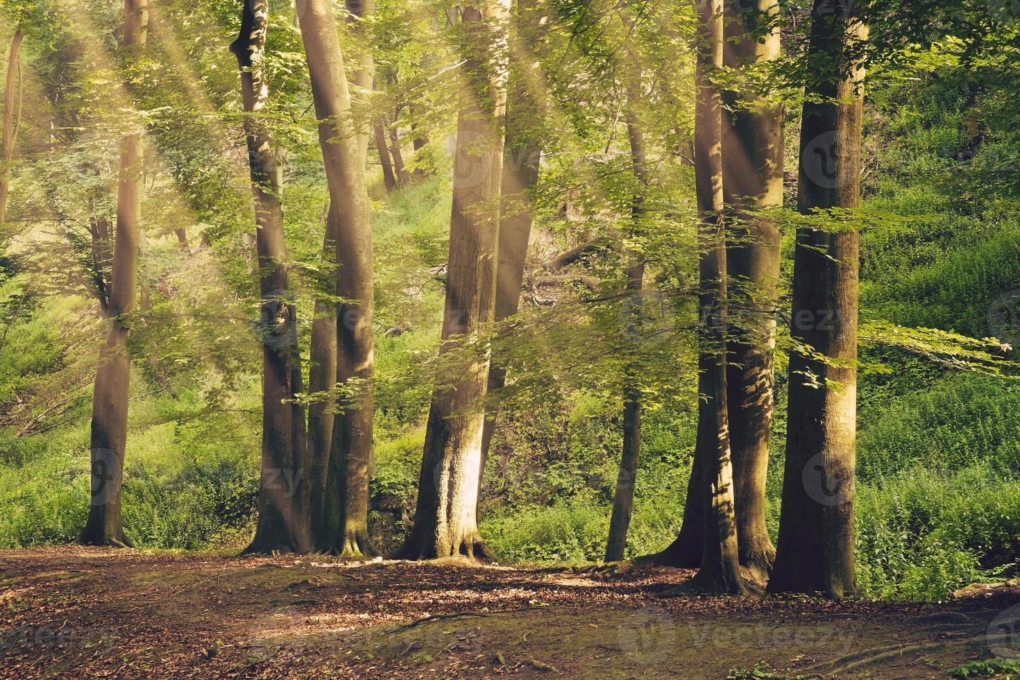 hermoso bosque de verano foto
