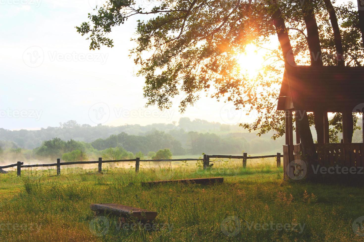 Summer morning photo