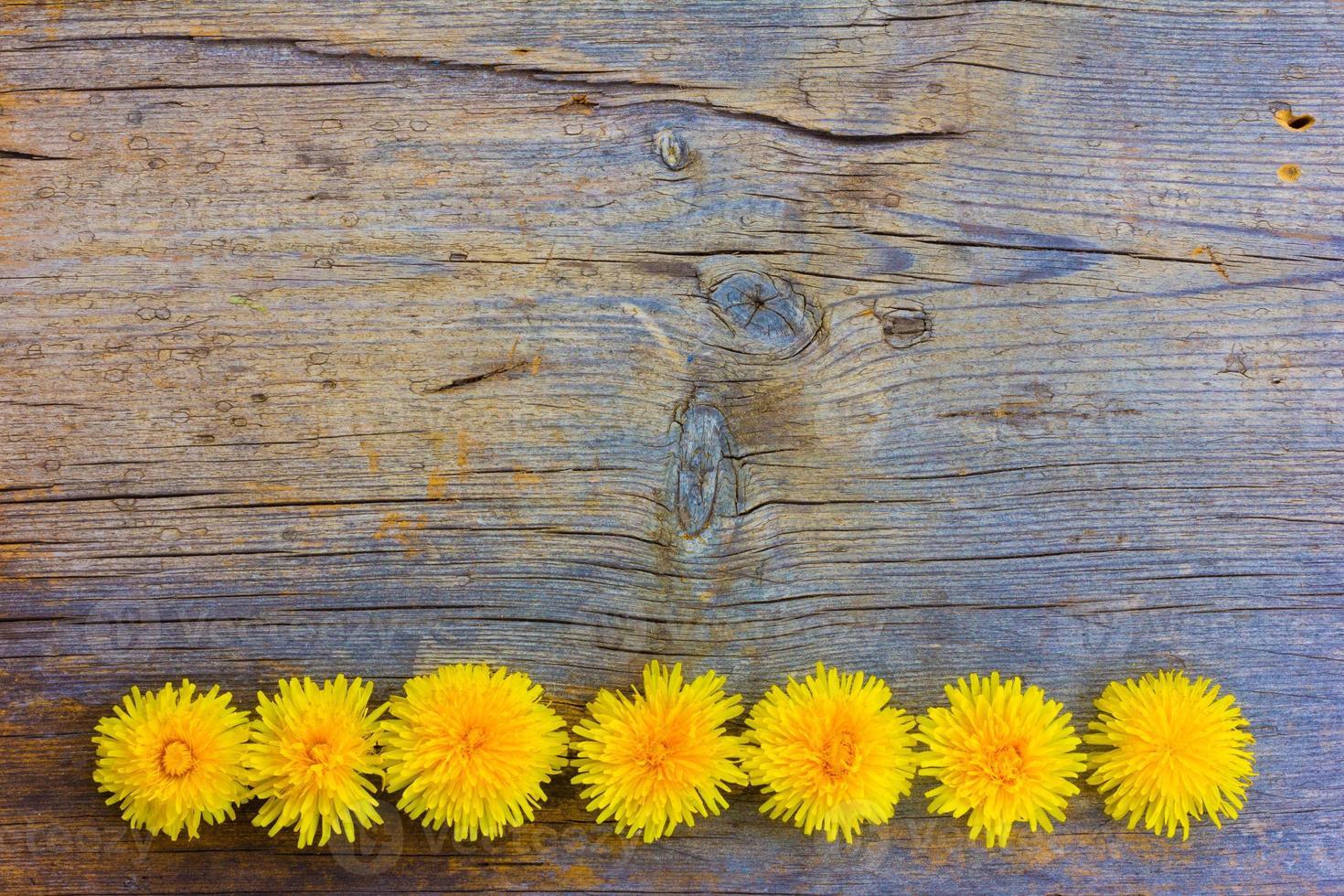 fondo de primavera foto