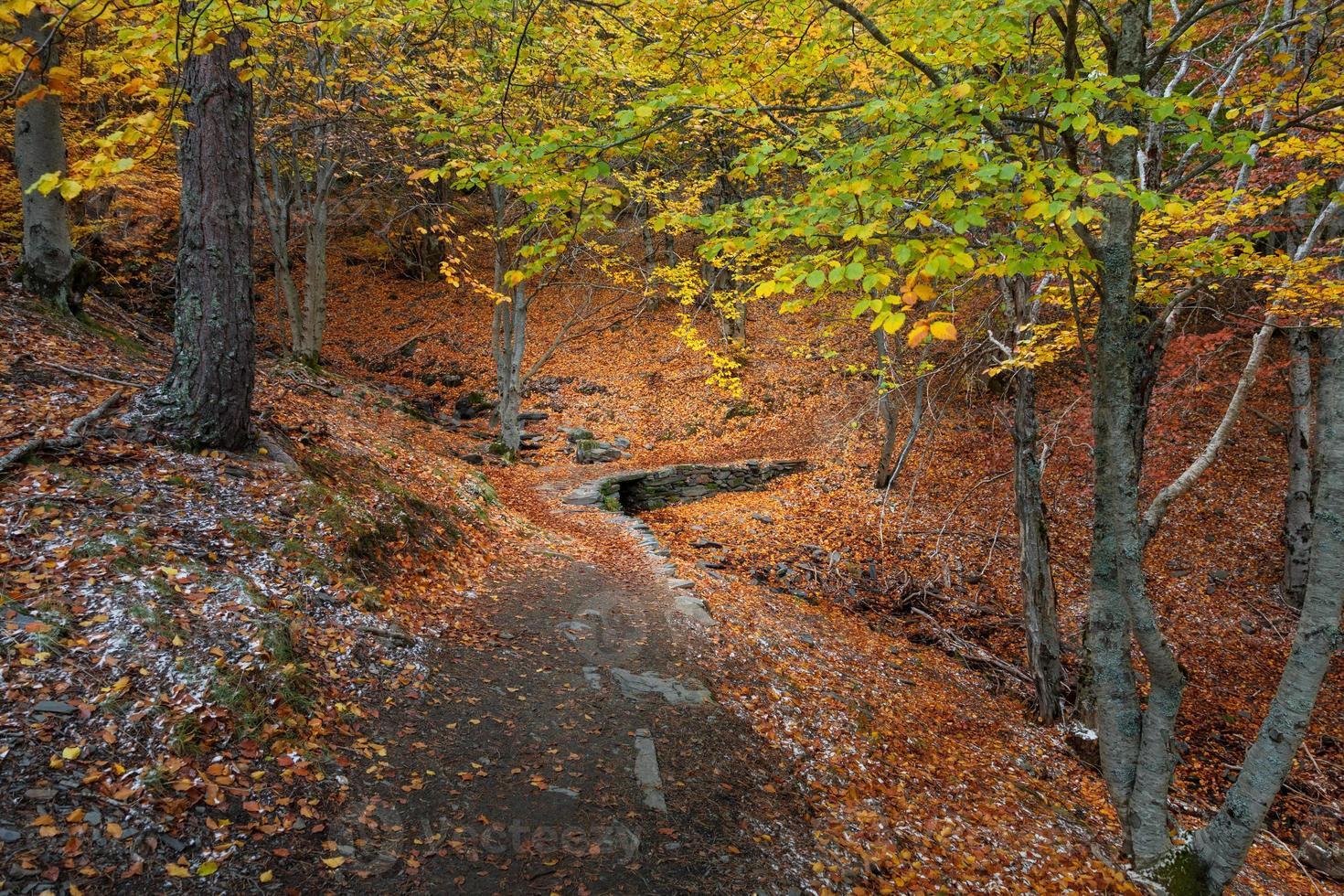 puente peatonal rústico en otoño foto