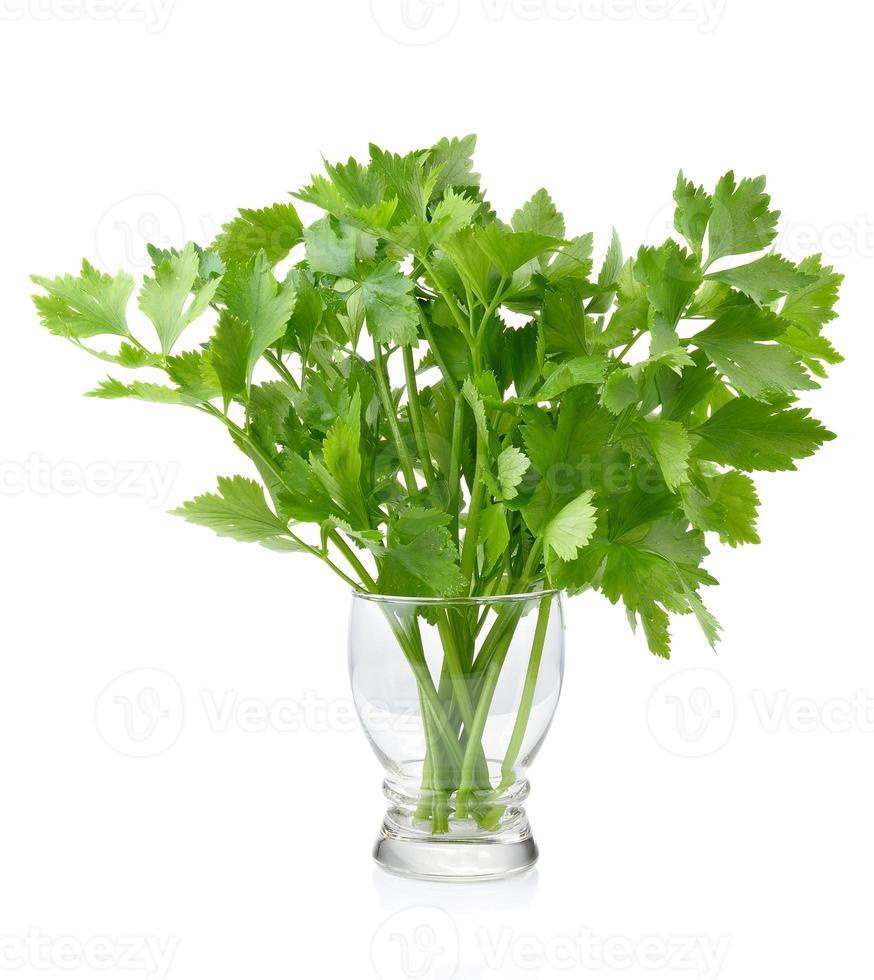 Green celery  on white background photo