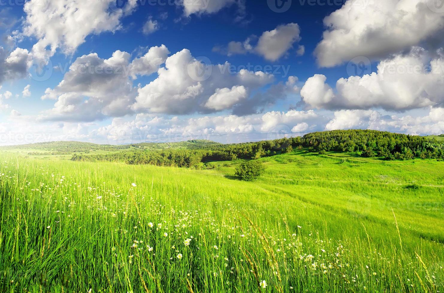 paisaje agricola foto