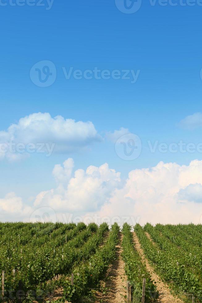 Beautiful vineyard landscape photo