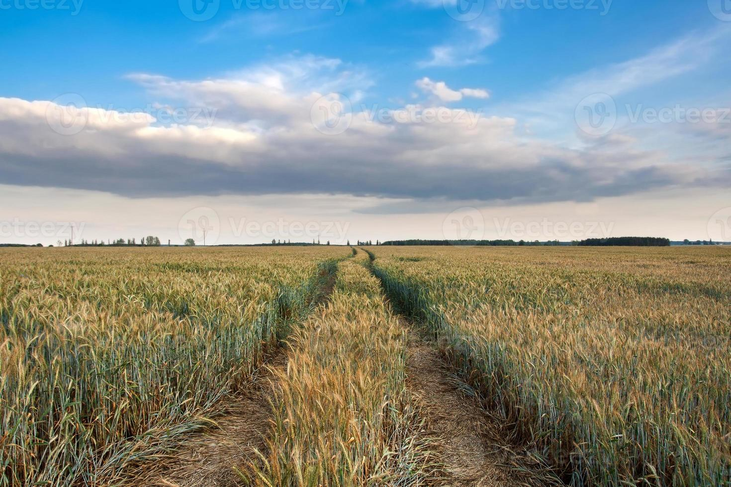 Spring field landscape photo